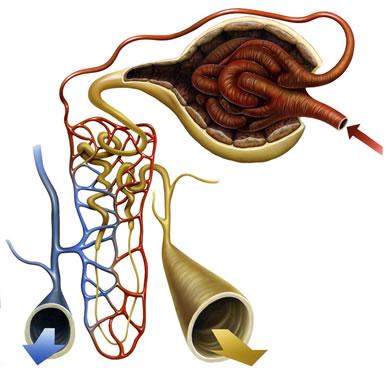 acido urico sangue alto alto acido urico dieta para acido urico alto pdf