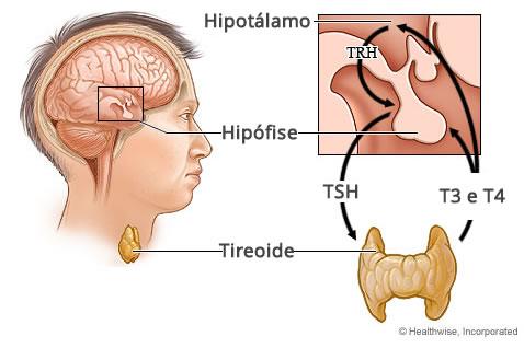 Eixo Hipotálamo-Hipófise-Tireoide