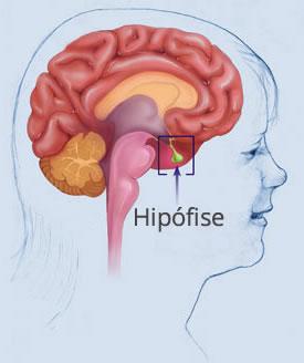Hormônio TSH Hipófise