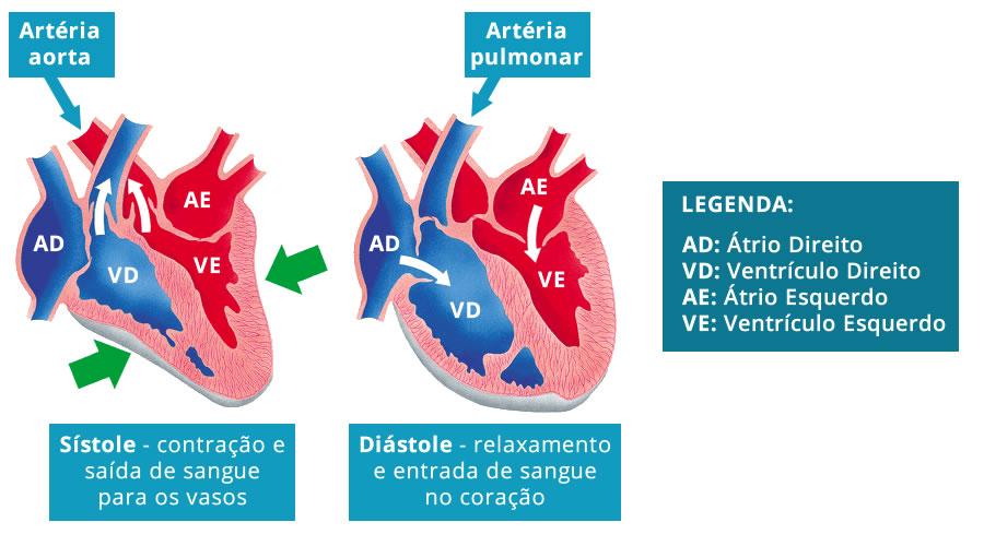 Imagem do ciclo cardíaco, para que você entenda o significado de Sístole e Diástole e, assim, o que significa Pressão ou Tensão Arterial